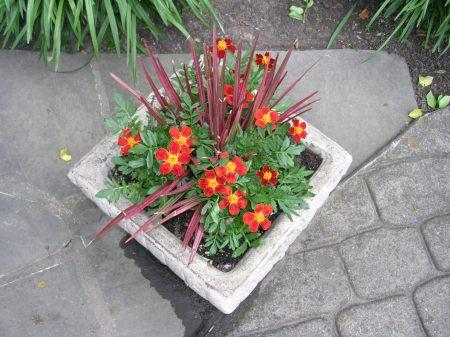 victory garden 028