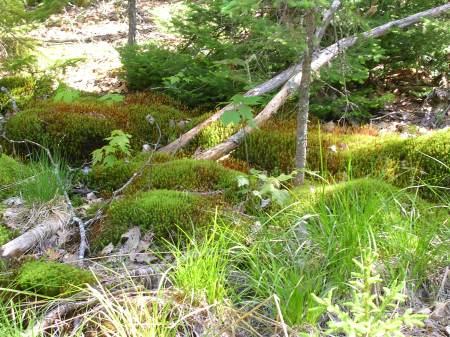 New moss